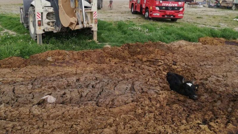 Denizli'de hayvan gübresine gömülen ineği itfaiye kurtardı