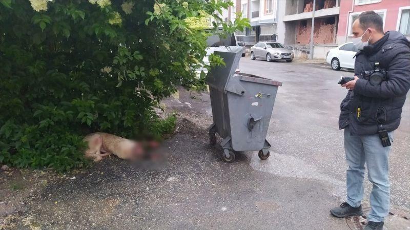 Kütahya'da sokak köpeği silahla vuruldu