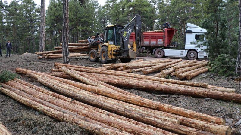 Orman köylüsünün 1600 rakımlı dağda zorlu mesaisi