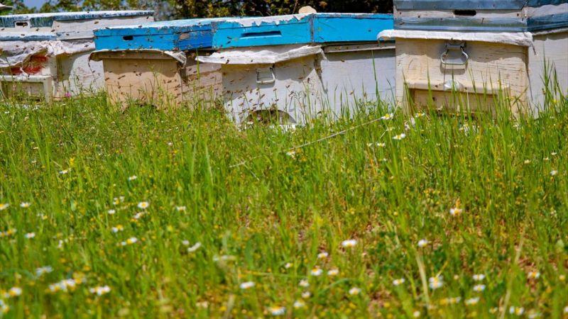 Eşinin vasiyeti arılar geçim kaynağı oldu