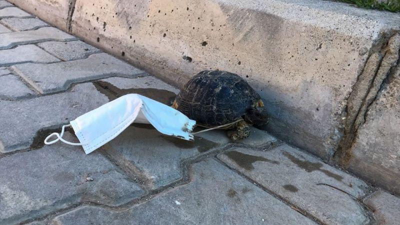 Ayağına maske takılan kaplumbağayı çocuklar kurtardı