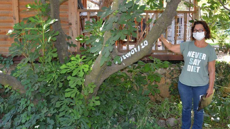 Muğla'da yetişen incir çeşitleri üzerine bilimsel araştırma başlatıldı