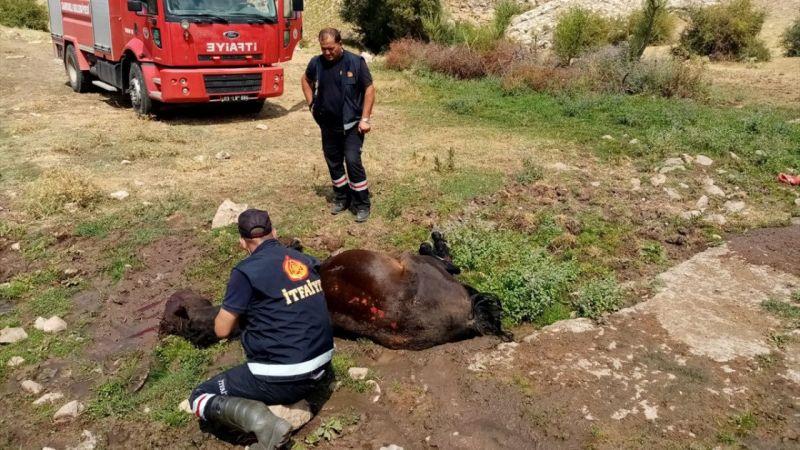 Yaralanan ve çamura saplanan yılkı atını itfaiye kurtardı