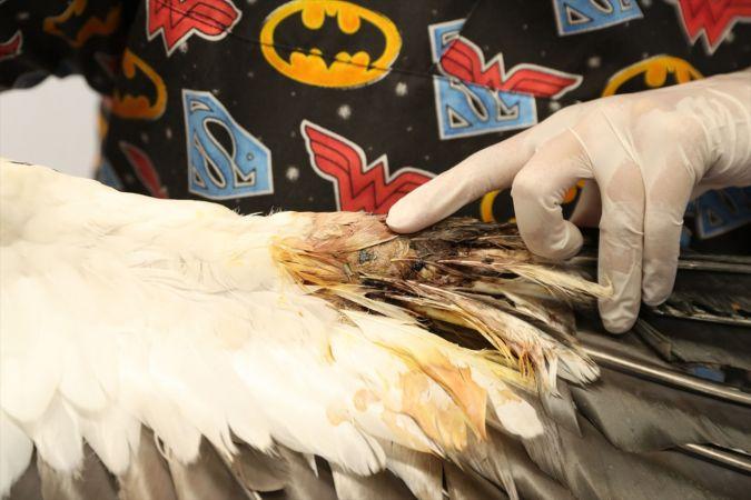 Denizli'de bulunan yaralı leylekler tedaviye alındı