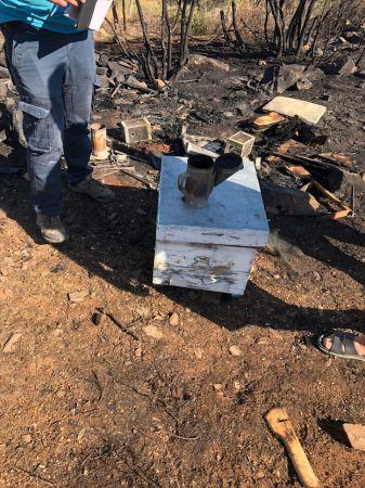 Muğla'daki orman yangınıyla ilgili bir arıcı gözaltına alındı