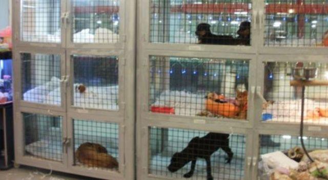 Kuşadası'nda evcil hayvan satışı yasaklandı