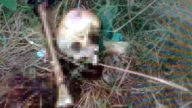 Piknik alanında dehşet! Kafatası ve kemikler bulundu
