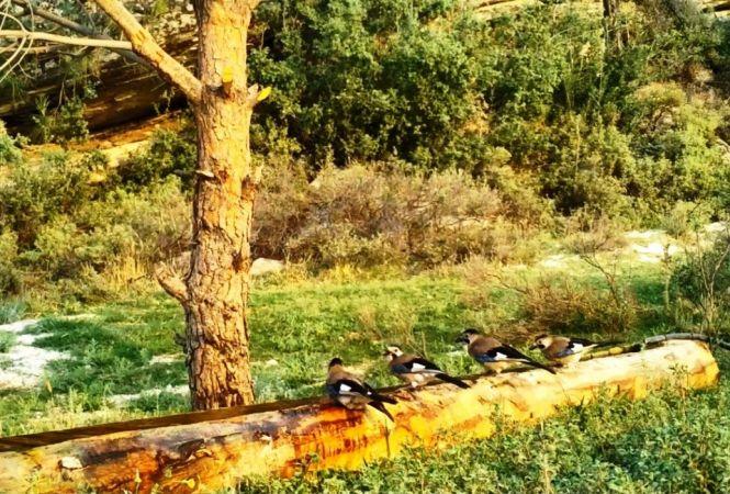 Aydın DKMP, yaban hayvanlarını unutmadı
