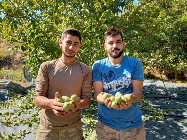 Aydın'da ceviz hasadı başladı
