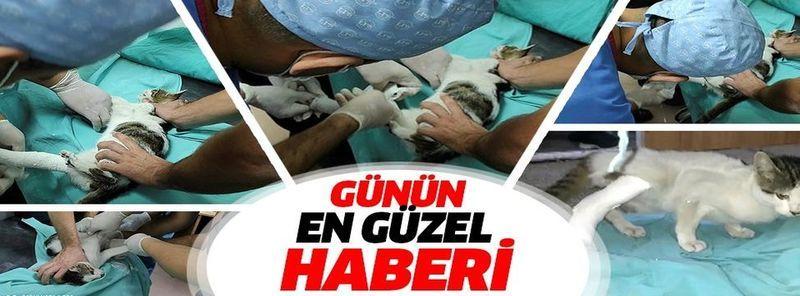 Kahramanmaraş'ta acil servise giren kedinin bacağının kırık olduğu anlaşılınca alçıya alındı