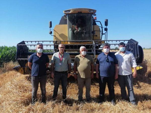 Tarsus'ta yerli tohum ekimi yapılan buğday çeşitleri hasat edildi