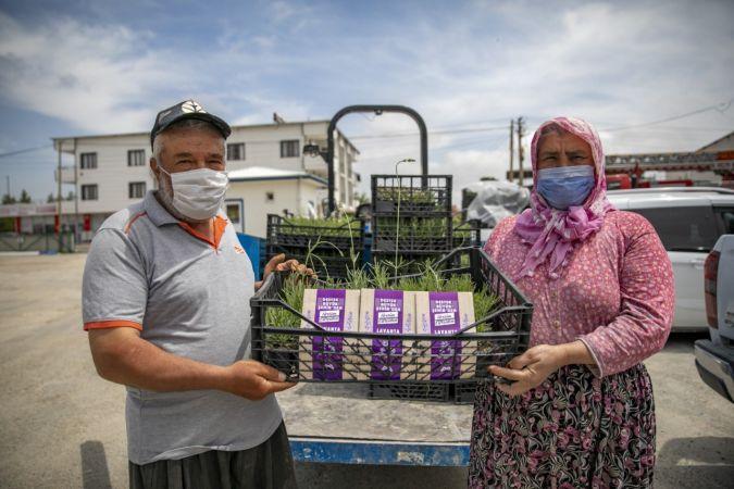 Mersin'de üreticilere lavanta fidesi dağıtıldı