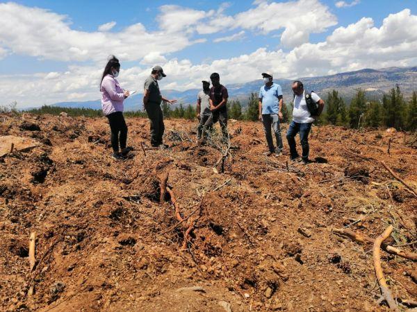 Mut'ta endüstriyel ağaçlandırma sahalarında toprak işleme çalışmaları başladı