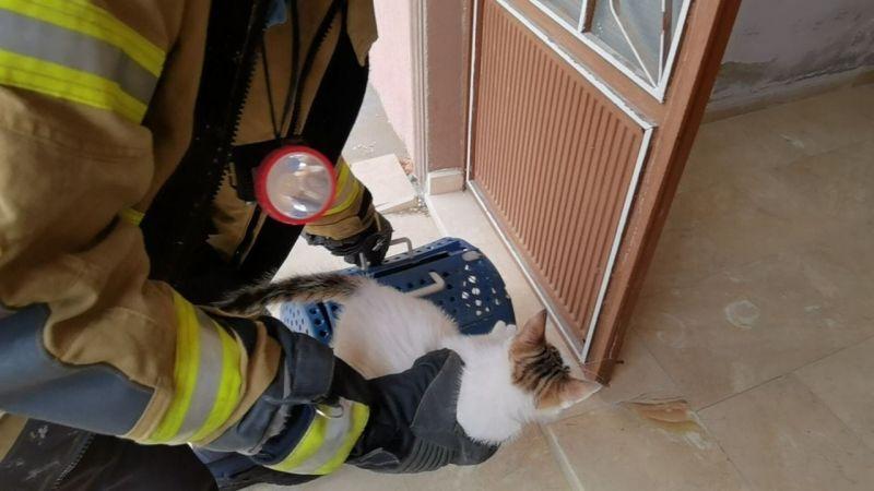 Anne kedi, sesler çıkartarak yavrusunu kurtardı; o anlar kamerada