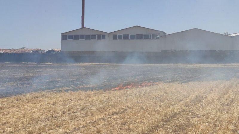 İslahiye'de anız yangını az kalsın fabrikayı yok ediyordu