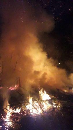 Narenciye bahçesindeki 30 ağaç yandı