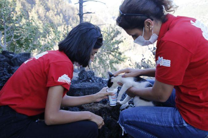 Zeydan Karalar'dan Yangından etkilenen hayvanlara tedavi ve yem desteği