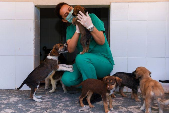 Kaşlı Geçici Hayvan Bakımevi, 1 Eylül'e kadar ziyarete kapatıldı