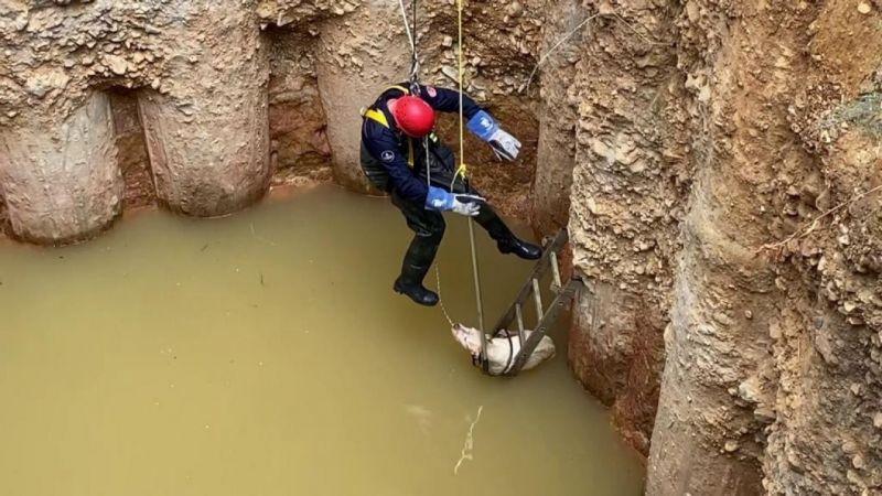 (Özel) Sancaktepe'de su dolu çukura düşen köpek donmak üzereyken kurtarıldı