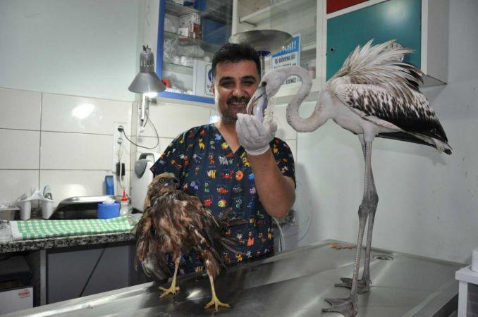 Mersin'de kuşlara yardım seferberliği