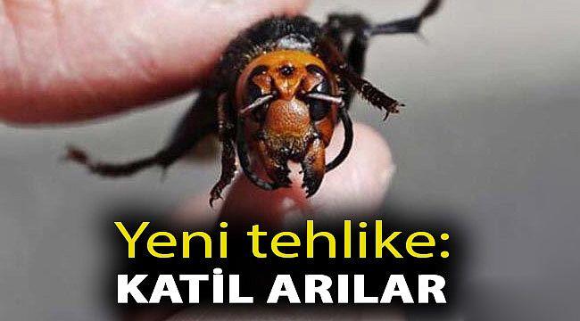 Katil Arılar Kestane Avlıyor