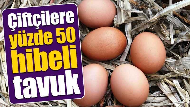 Büyükşehir'den çiftçilere yüzde 50 hibeli tavuk