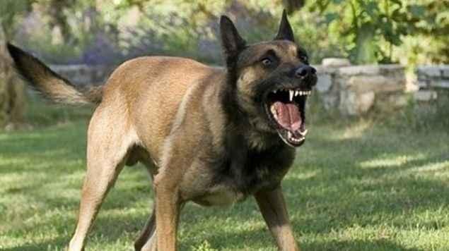 Sokak köpekleri saldırırsa oluşan zararı belediyeler karşılamak zorunda!