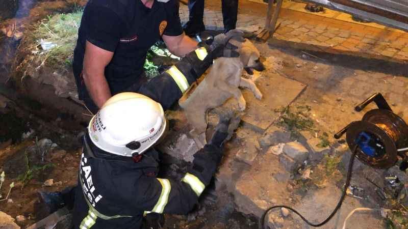 Toprak altında kalan köpeği elleri ile kazarak kurtardılar