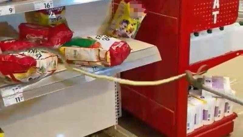 Alışveriş için gittikleri markette yılan çıktı