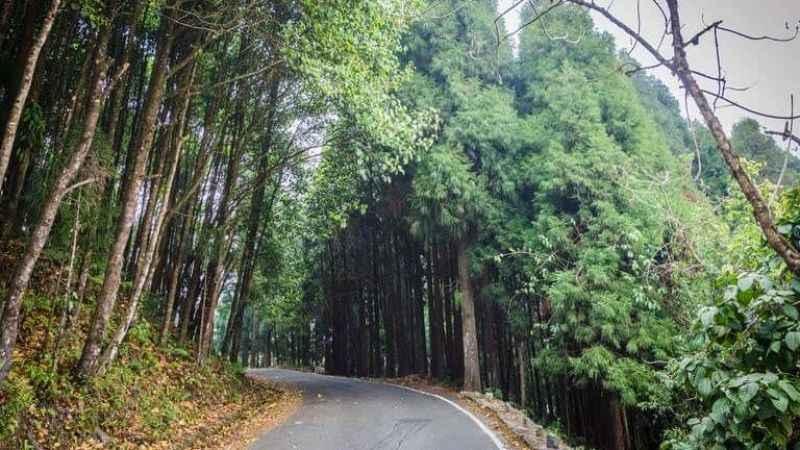 İki ilçeye orman yolları