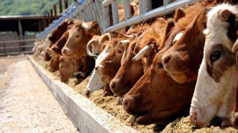 Hayvancılık yatırımı yapana yüzde 50 hibe desteği