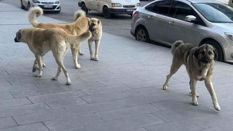 Kocaeli'de sokak köpekleri sorununa sahiplendirme ofisi önerisi