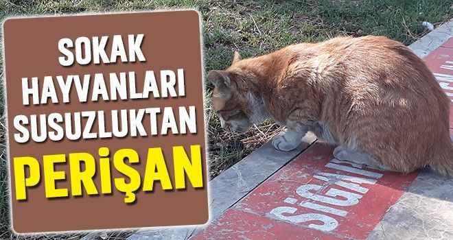Sokak hayvanları susuzluktan perişan