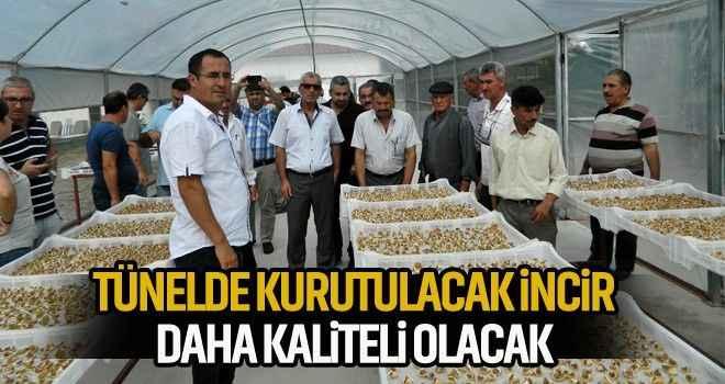 Tünelde kurutulacak incir daha kaliteli olacak