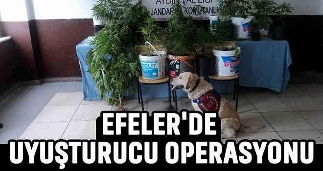 Efeler'de uyuşturucu operasyonu