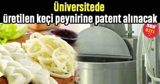 Üniversitede üretilen keçi peynirine patent alınacak