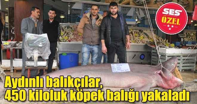 Aydınlı balıkçılar, 450 kiloluk köpek balığı yakaladı