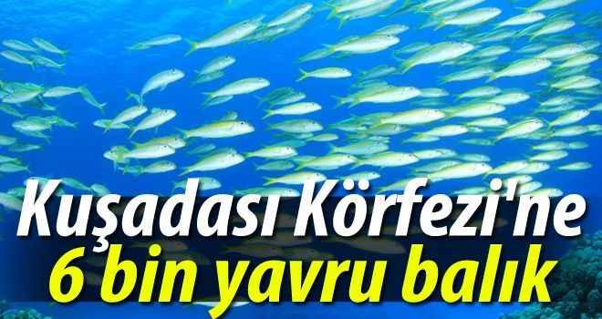 Kuşadası Körfezi'ne 6 bin yavru balık