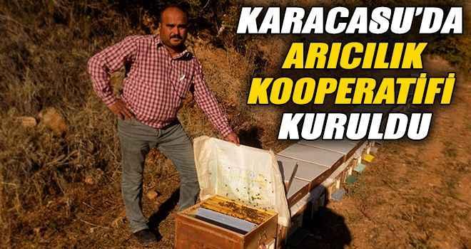 Karacasu'da arıcılık kooperatifi kuruldu