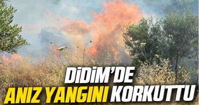 Didim'de anız yangını korkuttu