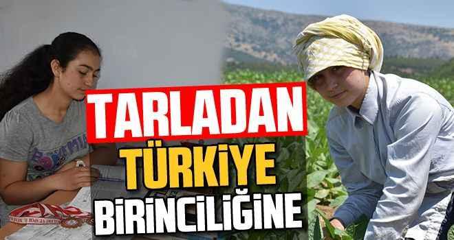 Tarladan, Türkiye birinciliğine