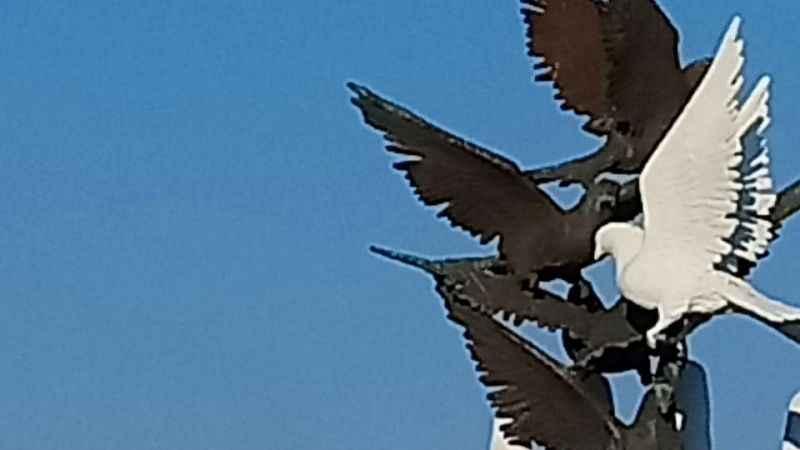 Altın Güvercin, 6 yıl sonra yeniden kanatlanıyor