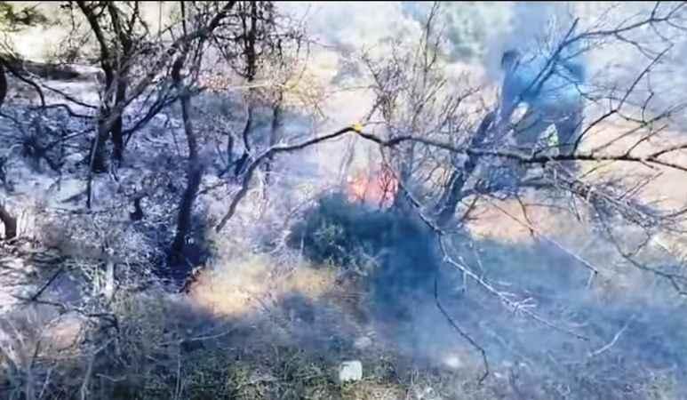 Karpuzlu'da örtü yangını söndürüldü