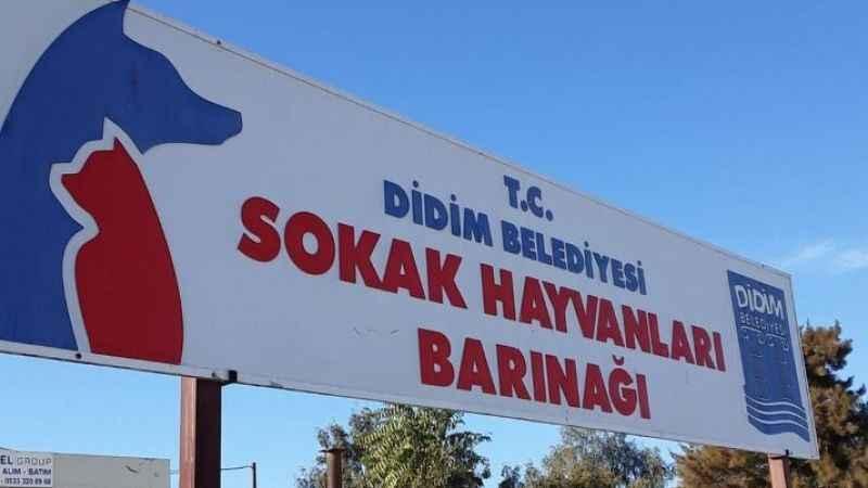 Didim'de barınak geçici olarak kapatıldı