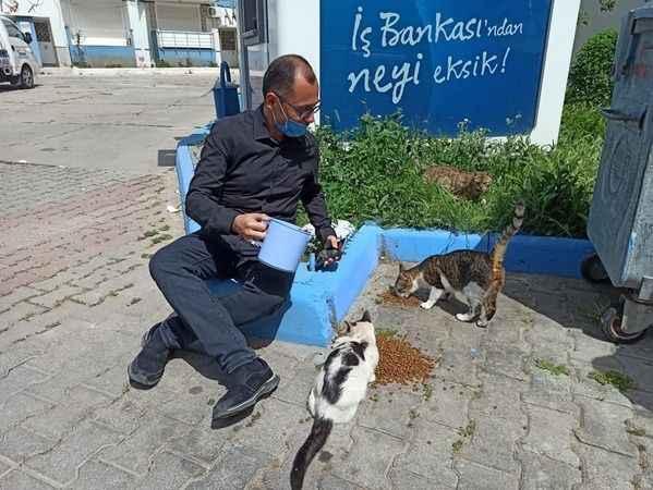 Kaymakam Avşar, sokak hayvanlarına mama bıraktı