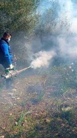 Didim'de sineklere karşı şafak ilaçlaması
