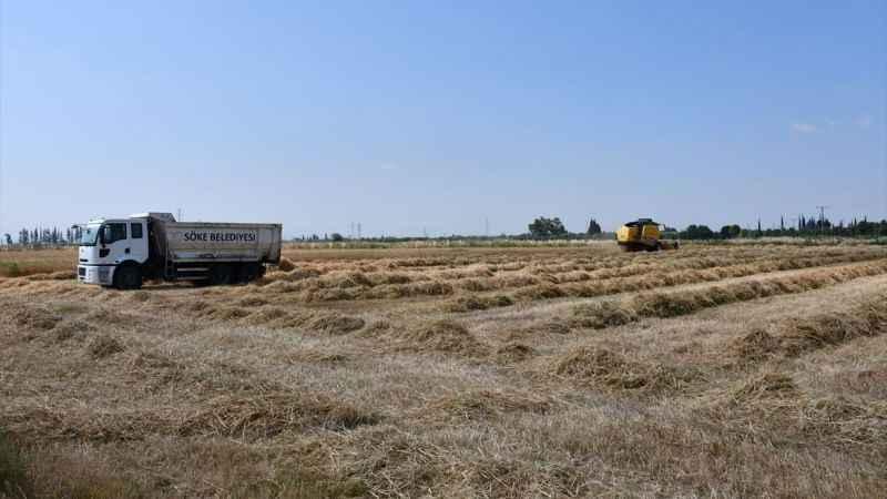 Söke Belediyesi'nin ürettiği buğdayın hasadı yapıldı