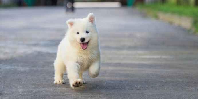 Köpeklerde İshal, Kusma ve Gençlik Hastalığı