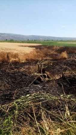 Atça'da buğday tarlası kundaklandı