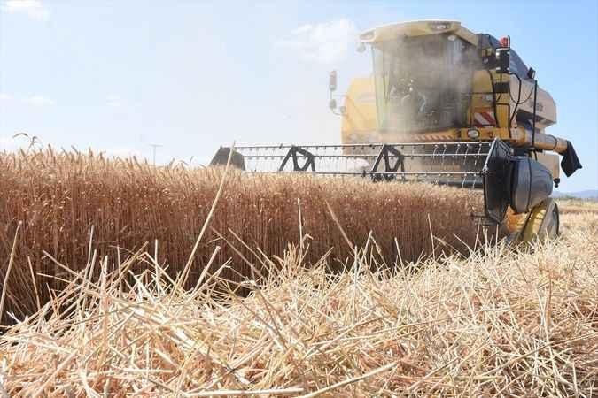 'İlimizde buğday ekili alan yüzde 37 arttı'